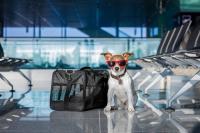Вывоз животных за границу надежно для клиентов - сайт vet.zp.ua