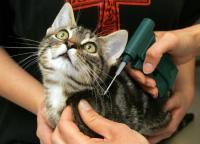 Чипирование животных цена выгодная для клиентов - сайт vet.zp.ua