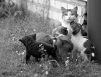Усыновление в среде животных (межвидовое усыновление)