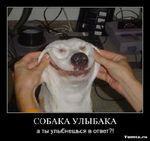 Собаки. Подборка классных демотиваторов