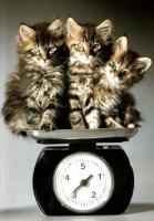 Профилактика ожирения у кошек и собак