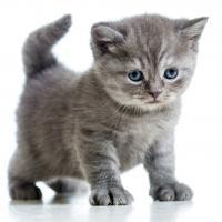 Клички котов