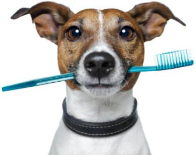 dog with toothbrush2