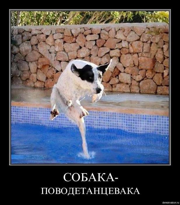 Собака Обижака | Чип, Тишка и Тошка | Постила | 702x617